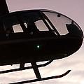 Silhouette Raven II by Paul Job