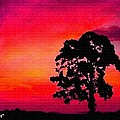 Silhouette Sunset H A by Gert J Rheeders
