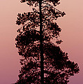 Silhouette Tree At Sunrise by Gary Langley