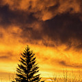 Silhouetted Evergreen Tree by Michael Interisano