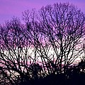 Silhouettes Against Pink Skies by Maria Urso