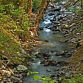 Silky Stream In Rain Forest Landscape Art Prints by Valerie Garner