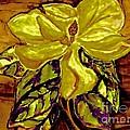Silky Magnolia by Marsha Heiken