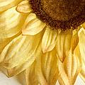 Silky Sun by Margie Hurwich
