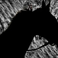 Silouette Of A Stallion by Blake Richards