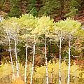 Silver Creek Canyon by Rich Stedman