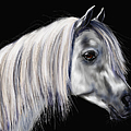 Grey Arabian Mare Painting by Michelle Wrighton