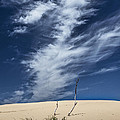 Silver Lake Dune With Grass Dead Trees And Cirrus Clouds by Randall Nyhof