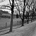 Silver Lane by M Hess
