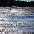 Silver Marsh by Judy Merrell