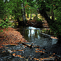 Silver River Channel In Autumn by Optical Playground By MP Ray
