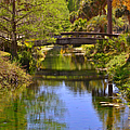 Silver Springs Florida by Christine Till