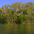 Silver Springs - Old-style Florida by Christine Till