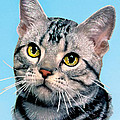 Silver Tabby Kitten Original Painting For Sale by Bob and Nadine Johnston