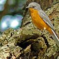 Silverbird by Tony Murtagh