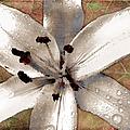 Silvery Asiatic Lily by Shawna Rowe