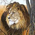 Simba by Johanna Lerwick