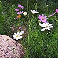 Simple Flowers 11460 by Jerry Sodorff