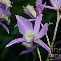Simple Purple by Susan Herber