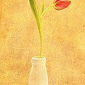 Simplicity -  No Words by Lori Frostad