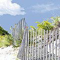 Simplified View Of Coastal Dune by Elaine Plesser