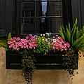 Simply Charleston by Karol Livote
