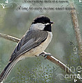 Simply Chickadee With Verse by Debbie Portwood