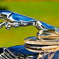 Simply Jaguar-front Emblem by Eti Reid