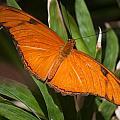 Simply Orange by Ronald Lake