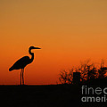 Simply Silhouette by Teresa Dunlap