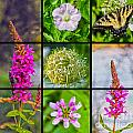 Simply Summer Wildflowers by Nina Silver
