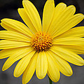 Simply Yellow by Charles Feagans