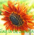 Sing In The Sunshine by Lizi Beard-Ward