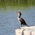 Singing Bird by Cynthia Guinn