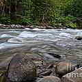 Singing Creek by Tim Rice