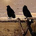 Singing Crows by Barbara D Richards
