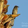 Singing Mockingbird by Marilyn Smith