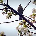 Singing Of Spring by Susan Garren