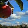 Single Apple by Andrea Anderegg