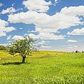 Single Apple Tree In Maine Blueberry Field by Keith Webber Jr