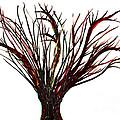 Single Bare Tree Isolated by Simon Bratt Photography LRPS