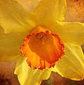 Single Daffodil by Karen Beasley