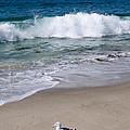Single Seagull On The Beach by Robert VanDerWal