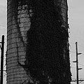 Single Ivy Silo by Terry Scrivner