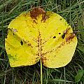 Single Leaf by Nick Kirby