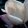 Single N White by William Havle