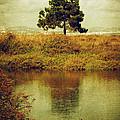 Single Pine Tree by Carlos Caetano