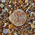 Single Shell Hatteras Island 17 9/3 by Mark Lemmon