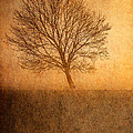 Single Tree by Garvin Hunter