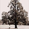 Single Tree Journey by Kathy Sampson